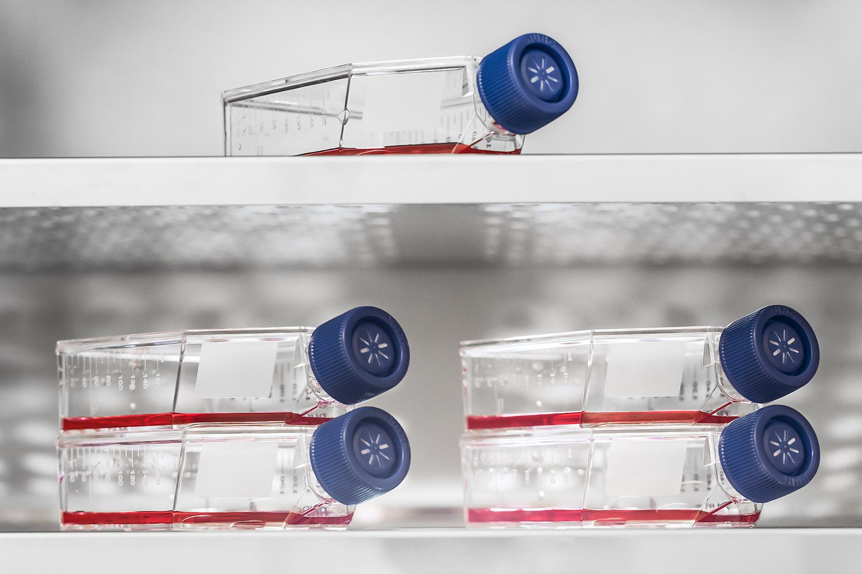 DIZG, Zellkulturflaschen mit Nährlösung